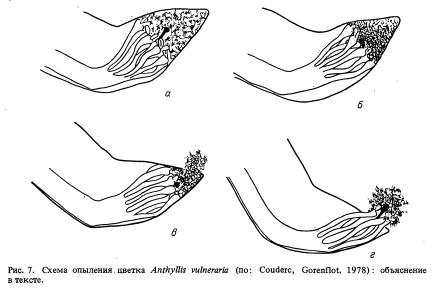 Антэкология бобовых (часть 2)