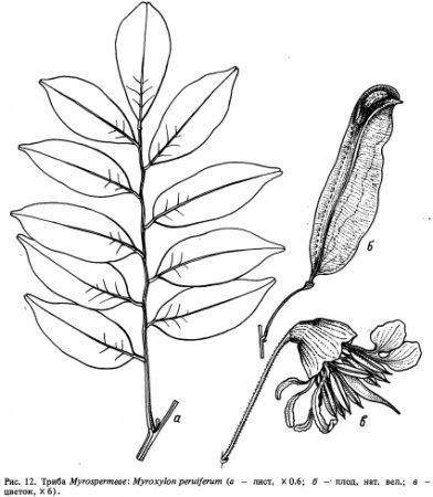 Триба Myrospermeae
