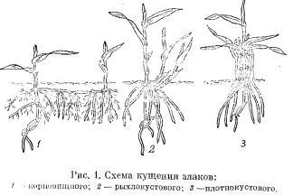 Типы растений по характеру побегообразования (часть 1)