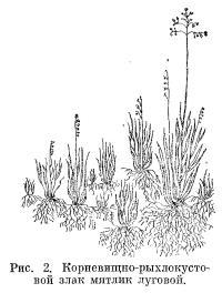 Типы растений по характеру побегообразования (часть 2)