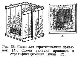 Стратификация, закалка и консервация привитых черенков (часть 1)