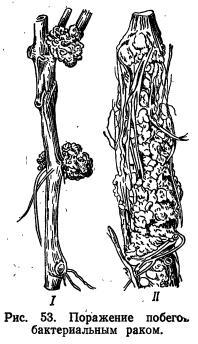 Признаки повреждения органов растения вредителями (часть 2)