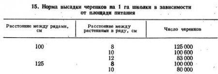 Посадка черенков в школку и выращивание саженцев (часть 2)