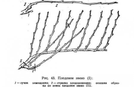 Основные формы куста (часть 1)
