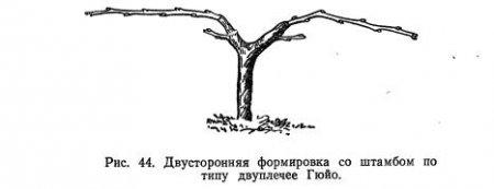 Основные формы куста (часть 3)