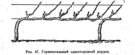 Основные формы куста (часть 4)