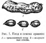 Семена и плоды (часть 2)