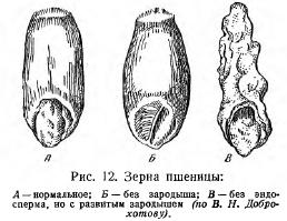 Зародыш (часть 1)