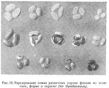 Морфологические признаки семян (часть 1)