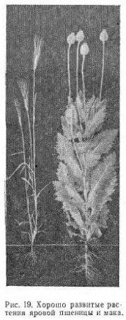 Вес 1000 семян (часть 2)