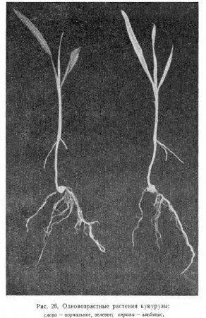 Становление проростка (часть 5)