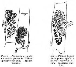 Влияние разных факторов на проявление иммунитета (часть 5)
