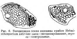 Опыты подтверждающие приобретенный иммунитет у растений (часть 1)